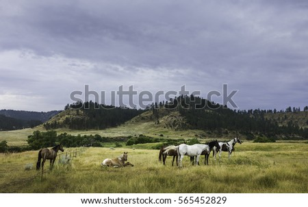 Shutterstock Billings, Montana, USA. Horses begin to stir at dawn on a peaceful summer morning in the heart of the prairie and rolling landscape near Billings, Montana, USA.