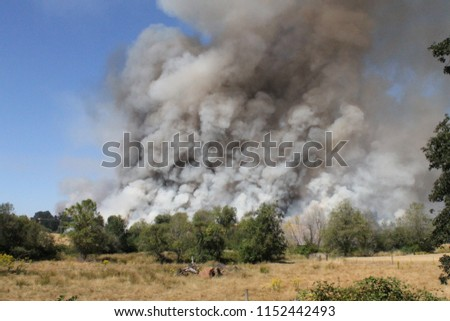 billowing smoke from forest fire