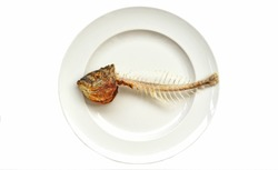 Bio-calcium or Remediating Soil Lead  from bone fish Fish bone with head on white dish with white background.