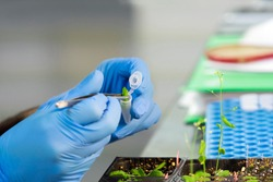 Bio scientist working on food innovation research for changing the food revaluation
