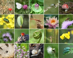 Biodiversity collage with all non-agricultural value plants or animal, but important for eco-balance (all images belong to me)