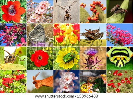 Biodiversity collage with all non-agricultural value plants or insects, but important for ecological balance (all images belong to me)