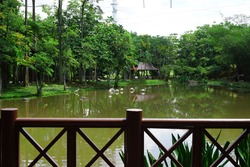 Biodiversity of Flamingo Pond beautiful landscape at Wetlands Park Putrajaya, Malaysia