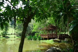 Biodiversity of Flamingo Pond with hut beautiful landscape at Wetlands Park Putrajaya, Malaysia