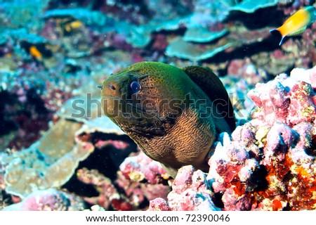 Biodiversity of Polynesia