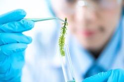 Biofuel research process in laboratory, Microalgae Photobioreactor for alternative energy innovation in Renewable Energy Laboratory