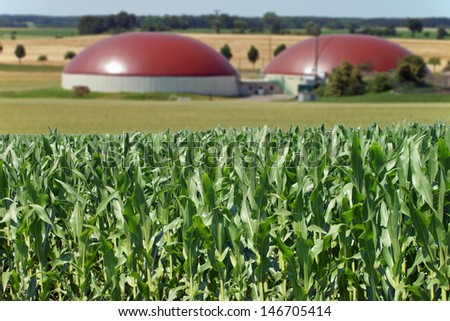 Biogas facility and corn field / renewable resources