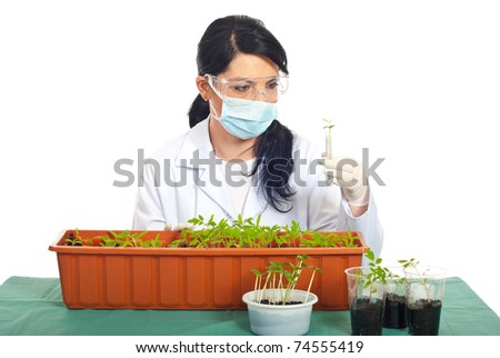 Biologist woman examine new leaves of tomato and cucumber  in tubes isolated on white background - stock photo
