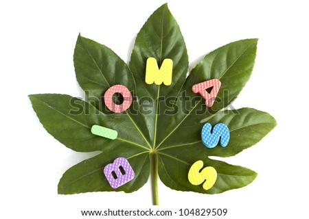 "Biomass concept - green leaf and the word ""Biomass"" written with colorful letters isolated on white background"
