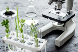 Biotechnology laboratory with plants and microscope on table.