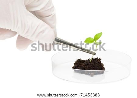 Biotechnology researcher puts plant specimen into petri dish - stock photo