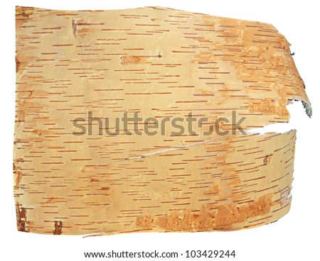 birch bark isolated on a white background
