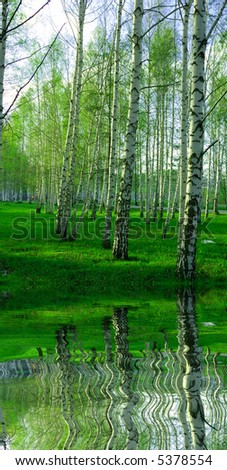 birch forest with long shadows reflected in rendered water