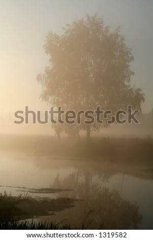Birch on the river bank in misty morning stock photo