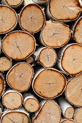 birch. stacked birch firewood. deforestation. logging. birch firewood is the best fuel. wood texture photo.  raw materials for fireplace and stove.