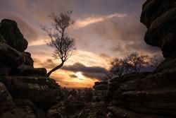 Birch Tree at Brimham Rocks, North Yorkshire