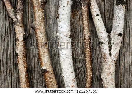 Birch tree trunks and branches on natural wood background - stock photo