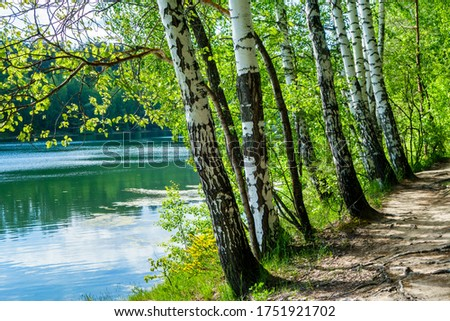 Birch trees growing near by water edge. Forest walking path located in right side Stockfoto ©