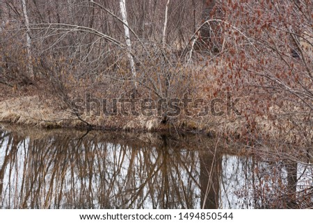 Birch trees reflected in water #1494850544