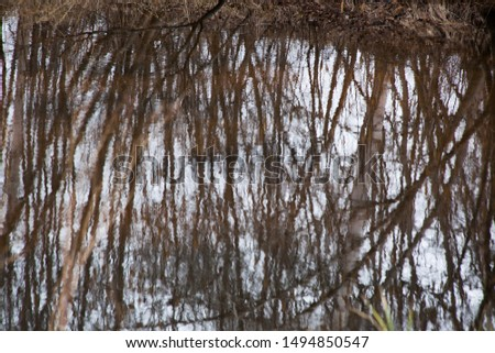 Birch trees reflected in water #1494850547