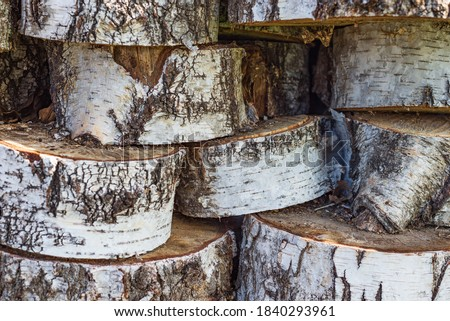 birch wood in storage in the forest Photo stock ©