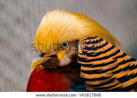 bird #545817868