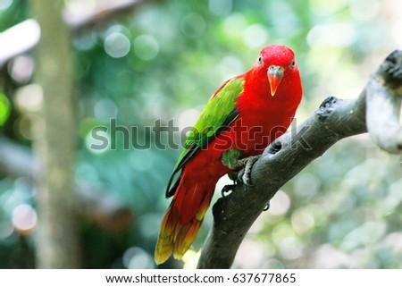 bird #637677865