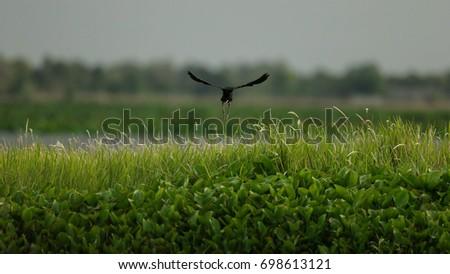 bird #698613121