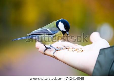 bird #742414048