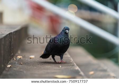 bird #750917737