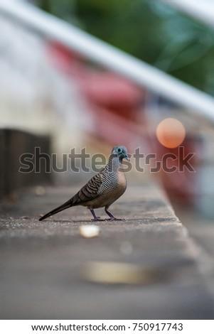 bird #750917743
