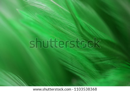 Stock Photo Bird and chickens feather texture for background Abstract,blur style and soft color of art design.for mobile case