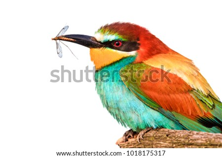 bird and mosquito in beak on white background , pest control