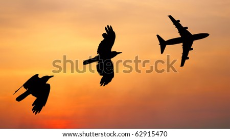 bird and plane flying black silhouette composition on sunset sky background