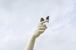 Bird at hand