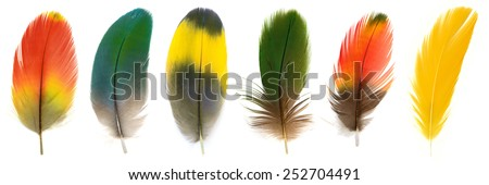 Bird, Beautiful Macaw feathers.