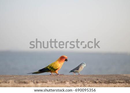Bird bird #690095356