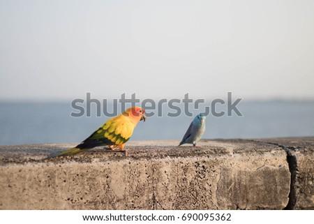 Bird bird #690095362
