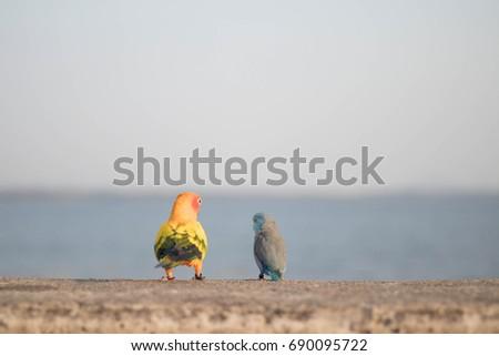 Bird bird #690095722