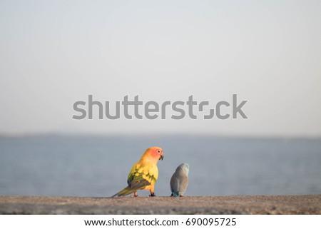 Bird bird #690095725