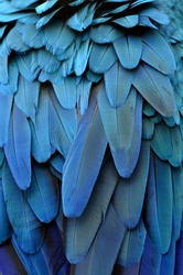 Bird, Blue and Gold Macaw feathers.