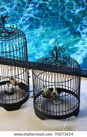 bird cage beside a swimming pool