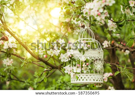 Bird cage on the apple blossom tree in sunset.