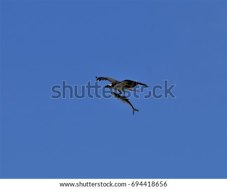 Bird catching a fish #694418656
