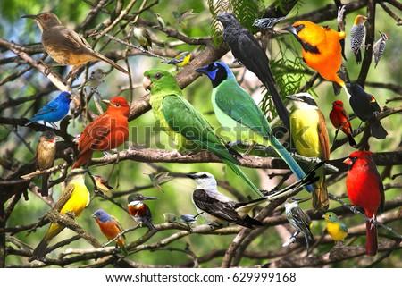 Bird Collage #629999168