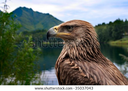 bird eagle on a background of mountains and forests