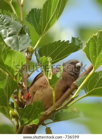 Bird eating fruit