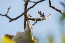 Bird entagled in fishing line on tree