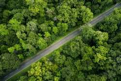 Bird eye view of forest road in Lahugala National park, Sri Lanka. Road covered with giant trees in forest give very reach nature vibe.   Taken from Drone