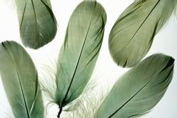 Bird feather  background.